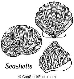 publicité, seashells., conception, objets, booklets, ...