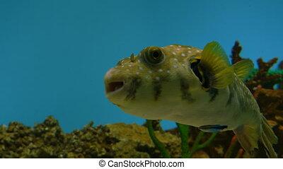 publiczność, akwarium, fish