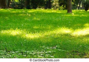 publik parkera, frisk, gräsmatta, med, morgon sol, lätt, in, perspektiv