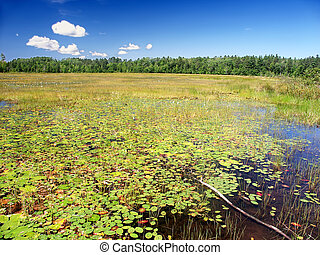 pudding, northwoods, wisconsin, lac, vent