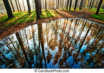 Puddle in the forest