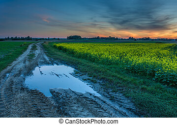 Puddle on dirt road, rape field and clouds after sunset