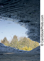 Puddle - Detail of a puddle in the mug with trees and sky in...