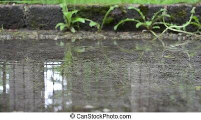 puddle water leaf fall - green tree leaf fall on puddle pool...