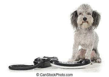 pudli, noha, telefon