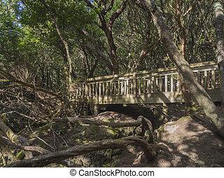 puente de madera, en, senda, sendero, de, los, sentidos,...