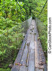 puente, lluvioso, baru, estación, excursionismo, sendero,...