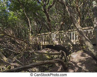 puente, viejo, sendero, primario, sentidos, trayectoria,...
