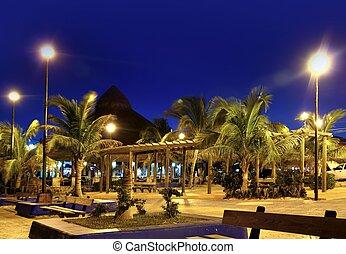 puerto, morelos, noche, árboles de palma, riviera maya