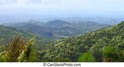 puerto rican, foresta pluviale