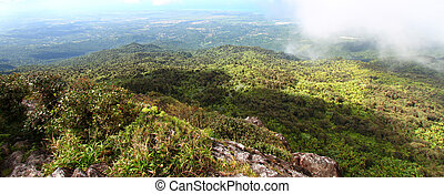 Puerto Rican Rainforest