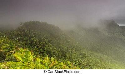 Puerto Rico El Yunque timelapse