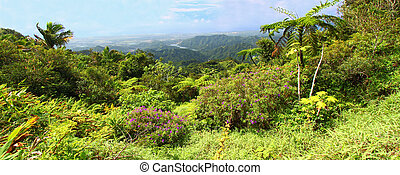 Puerto Rico Forest
