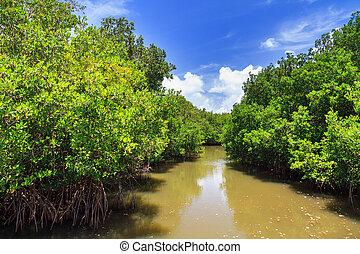 Puerto Rico mangrove river