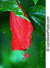 Puerto Rico Rainforest Flower