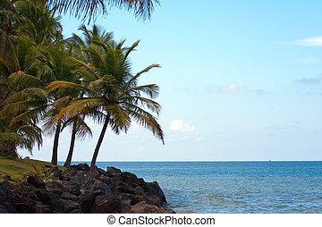 puerto, spiaggia luquillo, rico