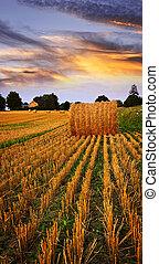 puesta de sol de oro, encima, campo de la granja