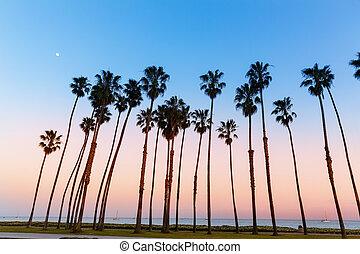 puesta sol california, palmera, filas, en, santa barbara