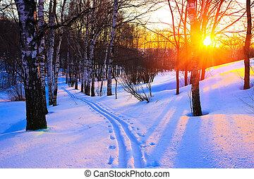 puesta sol roja, en, un, invierno, bosque