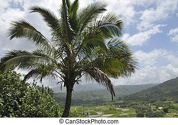Puesto de vigilancia, campo,  Princeville,  taro,  Kauai