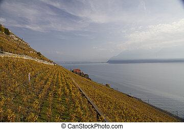 puesto de vigilancia, encima, el, suizo, wineyards