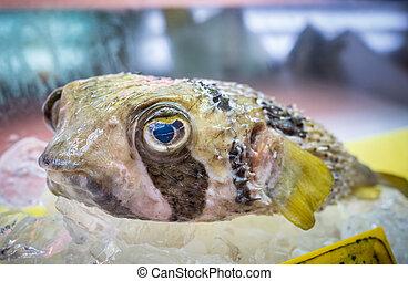 pufferfish, pez, fugu, o, japonés