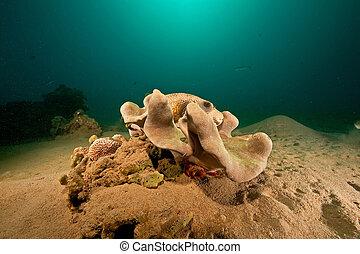 pufferfish, sol, océano, coral