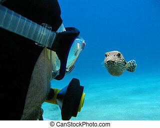 pufferfish, zambullidor de la escafandra autónoma