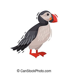 Puffin bird image. Cartoon Icelandic puffin. Vector illustration.