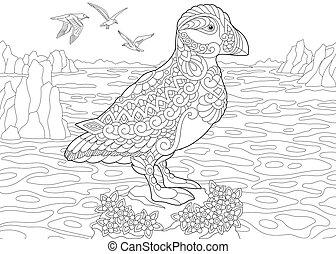 Puffin sea bird
