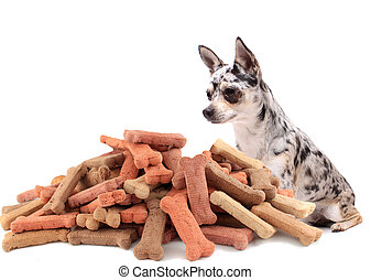 Pug and dog buiscuit treats - Little chihuahua dog stares at...