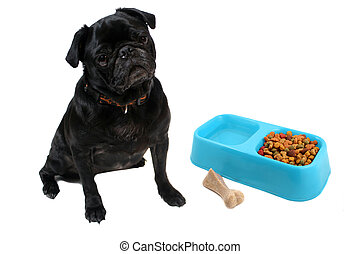 Pug and dogfood - Black colored Pugs with blue bowl full of...