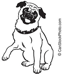 pug black white  - dog pug breed, black and white image