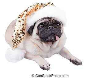 Pug dog - Funny pug dog laying down wearing a christmas...