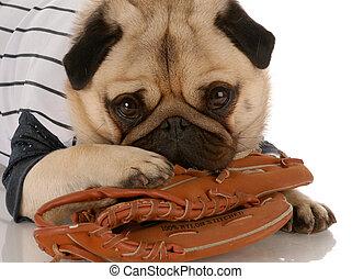 pug dog wearing baseball jersey with ball glove