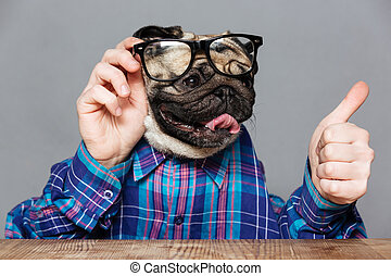 Pug dog with man hands in shirt and glasses