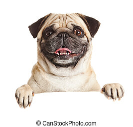 pug hond, met, leeg, billboard., dog, boven, spandoek, of,...