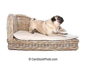 Pug on a luxury bed