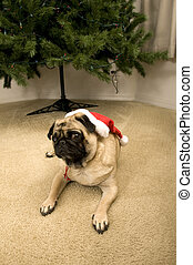 Pug Ready for Christmas