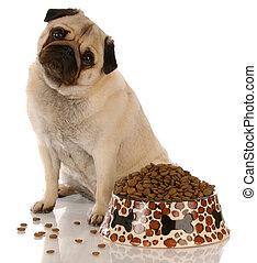 pug sitting beside a full bowl of dog food