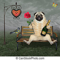 Pug with rose and wine on bench