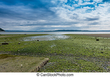 Puget Sound At Low Tide