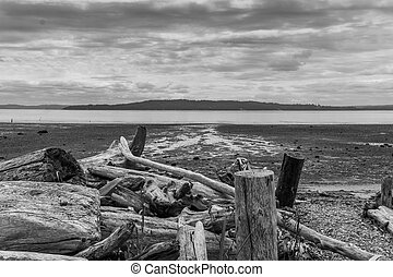 Puget Sound Seascape - A view of the Puget Sound at low tide...