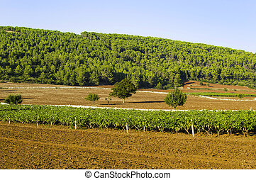 Puglia, italiano, vinho