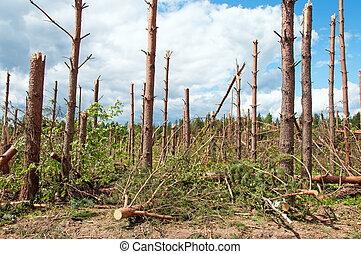 puissant, après, ouragan, arbres, cassé