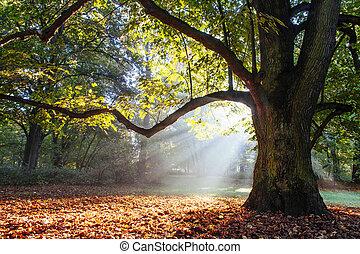 puissant, arbre chêne