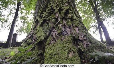 puissant, arbre, fond