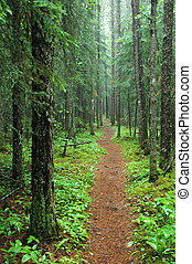 Pukaskwa Hiking Trail. Photograph - Hike to the White River...