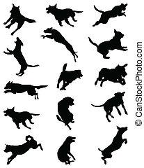 pular, cachorros