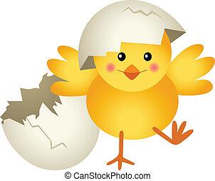pulcino, fesso, uovo, abbandono